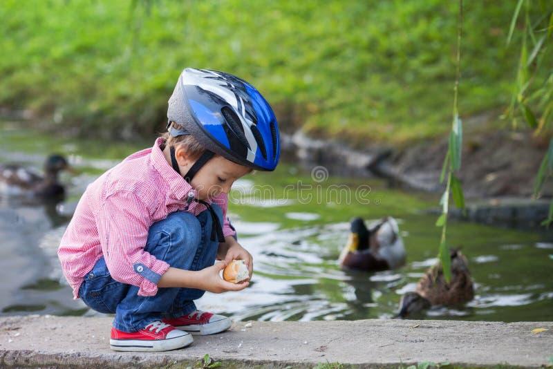 Entzückender kleiner Junge, Fütterungsenten lizenzfreie stockbilder