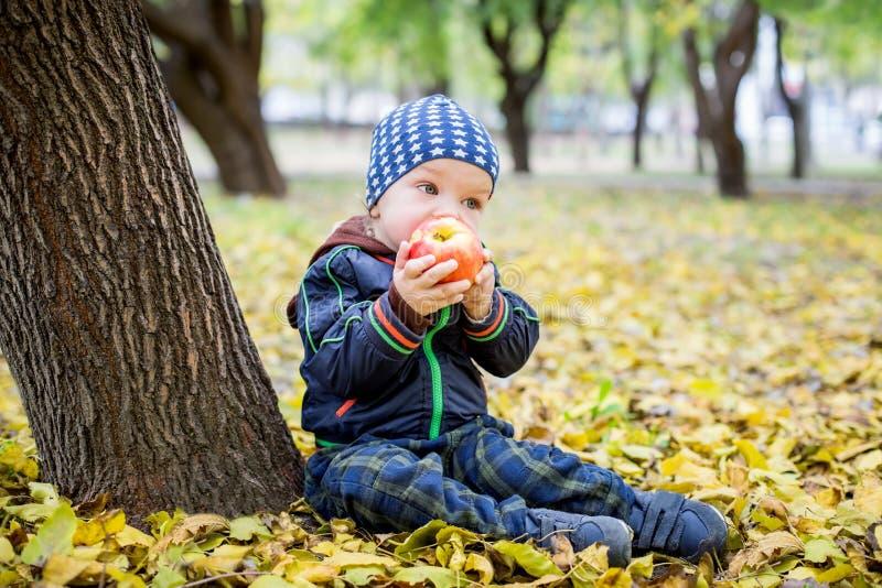 Entzückender Kleinkindjunge, der frischen roten Apfel isst stockbild
