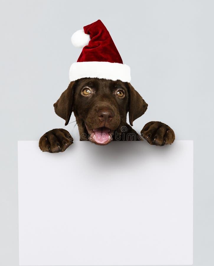 Entzückender Labrador retriever-Welpe, der einen Weihnachtshut hält ein Brettmodell trägt stockfoto