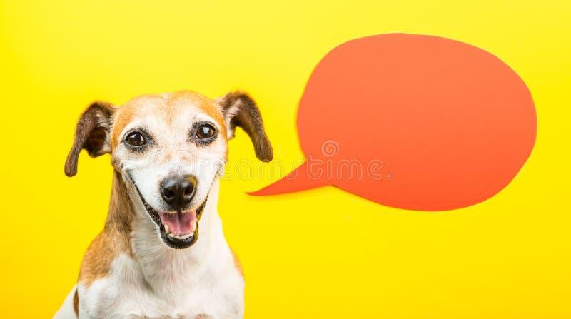 Entzückender lachender Hund mit offenem Mund Glückliches lächelndes Haustier auf gelbem Hintergrund und orange Spracheballon Lust stockbilder
