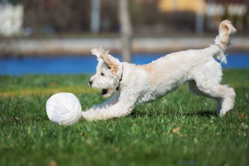 Entzückender Mischzuchthund, der draußen mit einem Ball spielt lizenzfreie stockfotos