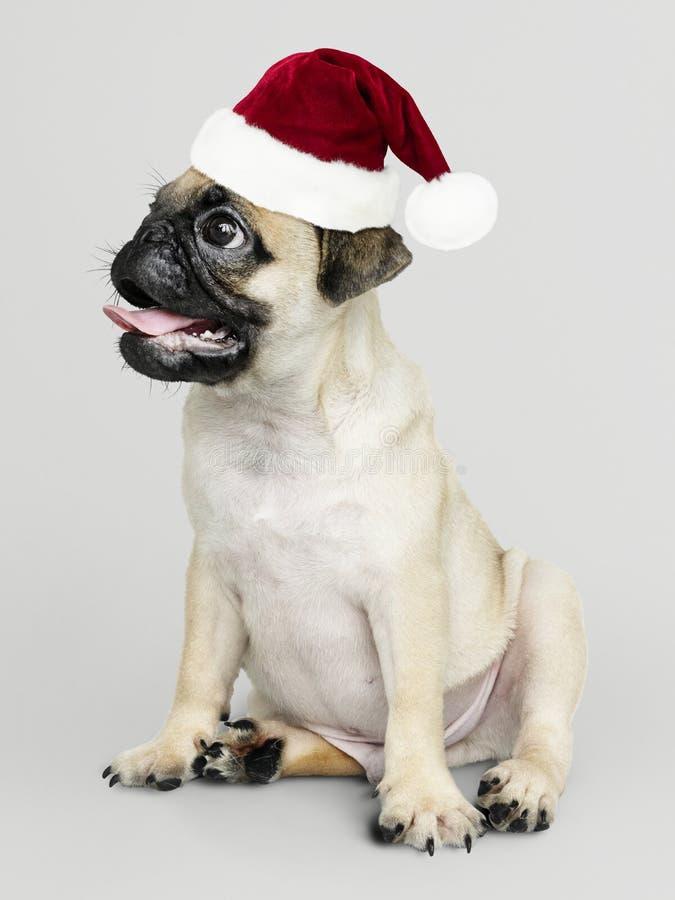 Entzückender Pugwelpe, der einen Weihnachtshut trägt lizenzfreie stockfotos