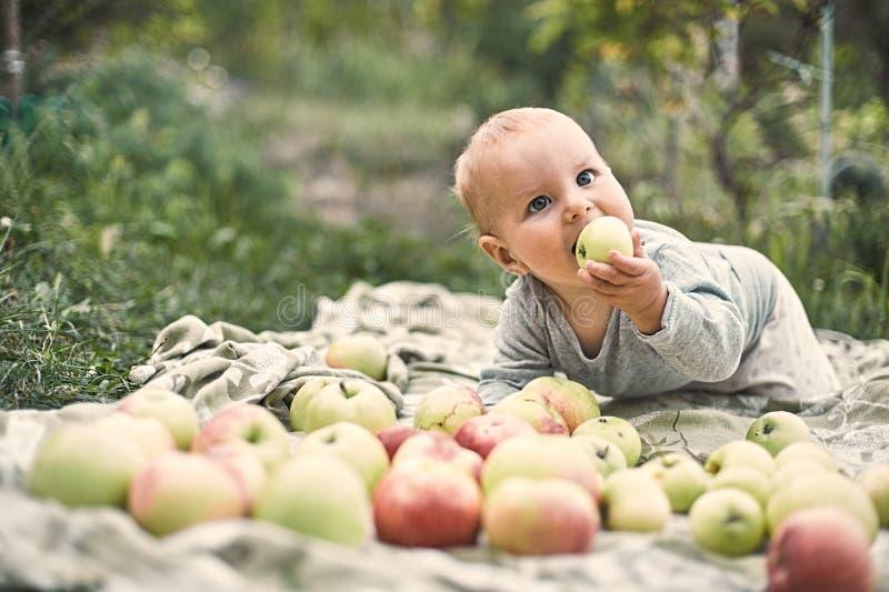 Entzückendes Baby, das den Apfel spielt im Garten isst Kind, das Spaß auf Familienpicknick im Sommergarten hat Kinder essen Fruch stockbild