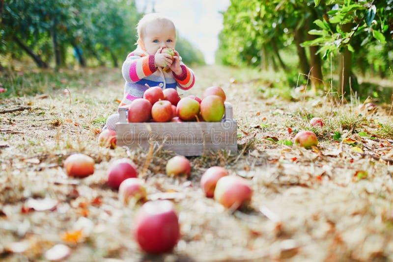 Entzückendes Baby, das voll aus den Grund nahe Kiste reifen Äpfeln sitzt lizenzfreies stockbild