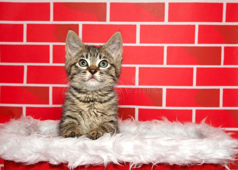 Entzückendes Kätzchen der getigerten Katze, knallend aus einem Weihnachtskorb heraus lizenzfreies stockbild