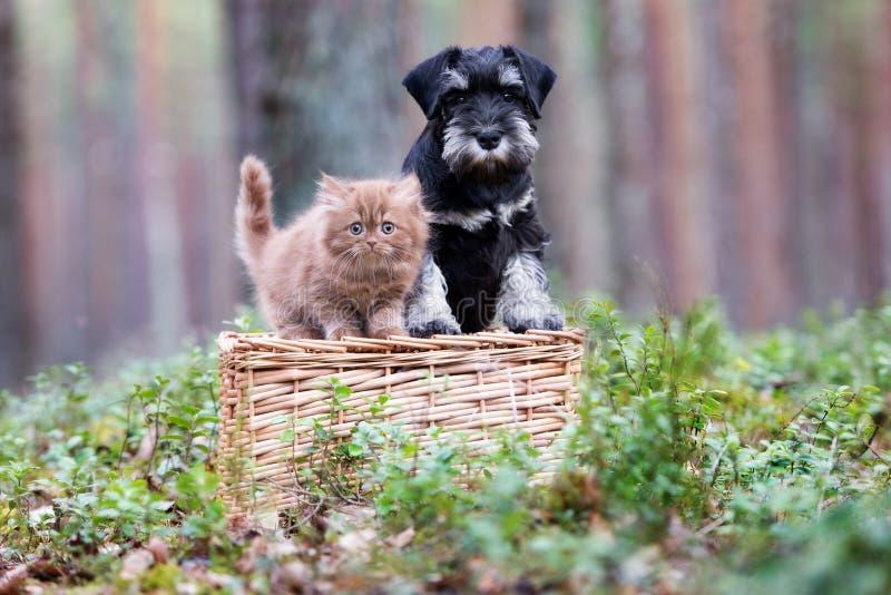 Entzückendes Kätzchen und Welpe, die draußen zusammen aufwirft stockbild