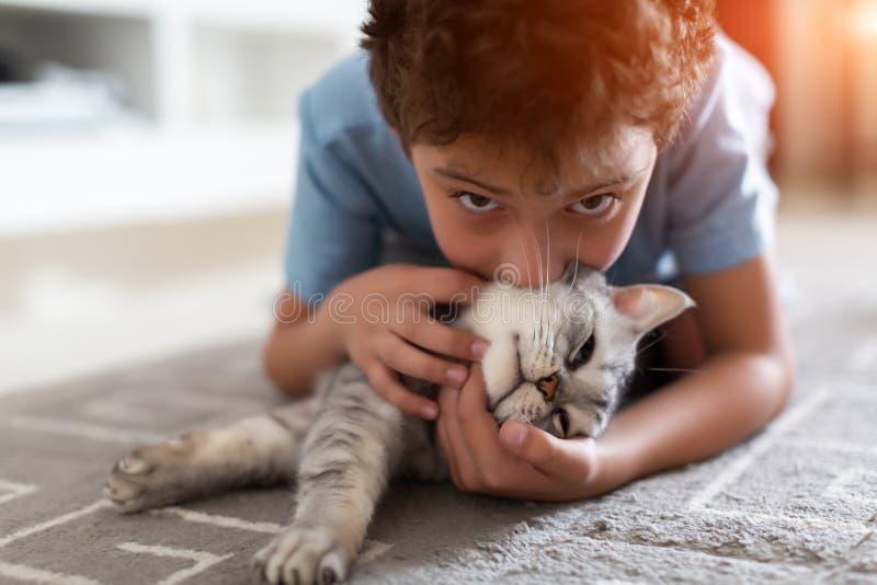 Entzückendes kleines Kind, das zu Hause mit grauem britischem shorthair auf Teppich spielt lizenzfreie stockbilder
