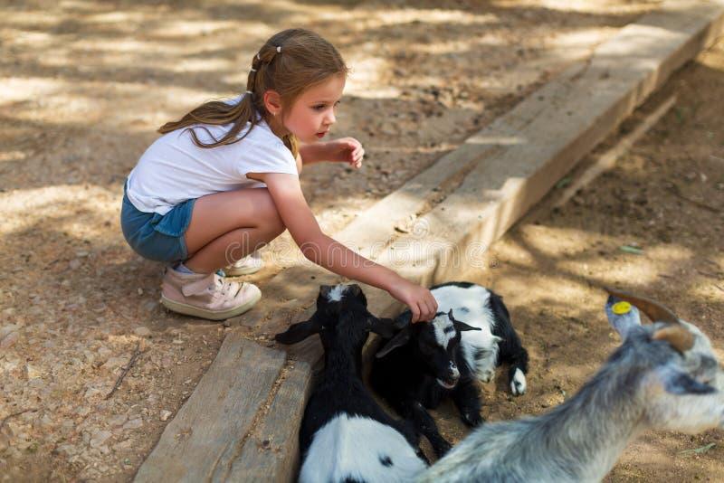 Entz?ckendes kleines M?dchen mit kleinen Ziegen am Zoo stockfotografie