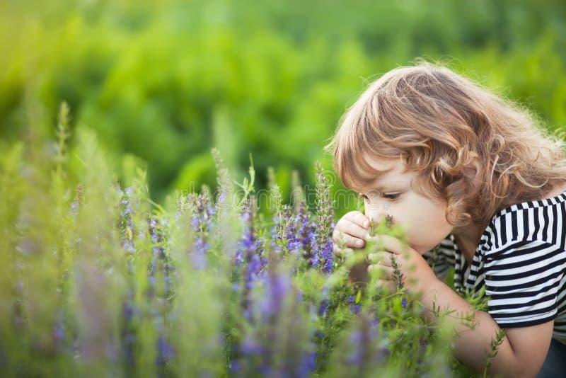 Entzückendes Kleinkindmädchen, das purpurrote Blumen riecht lizenzfreie stockfotos