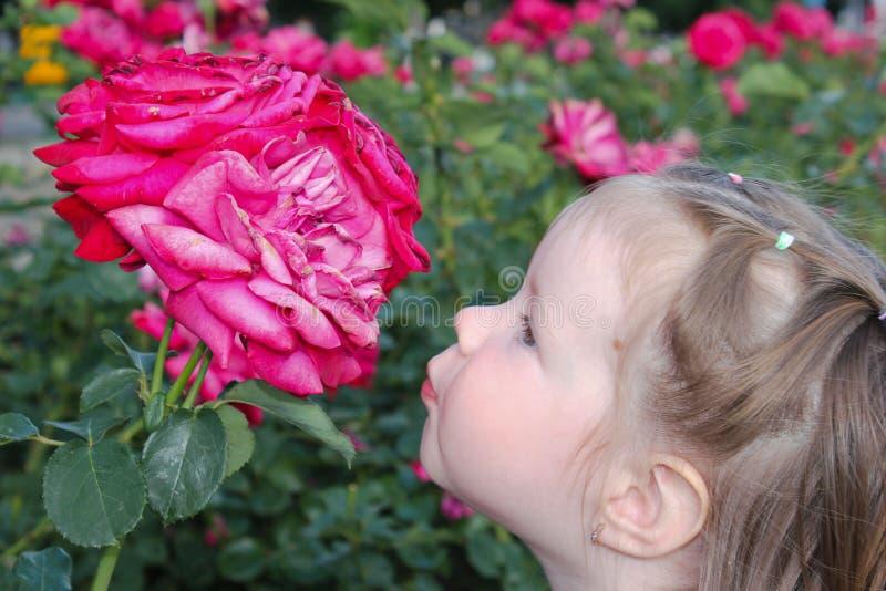 Entzückendes Mädchen möchte eine Rose küssen stockfoto