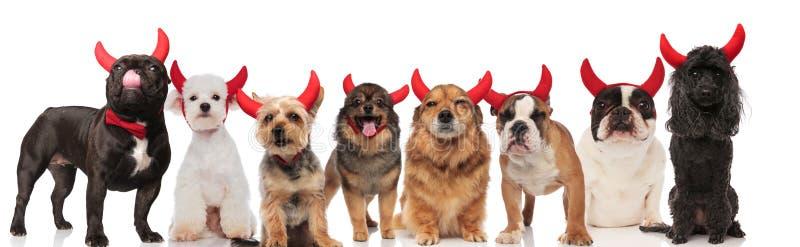 Entzückendes Team von acht Hunden gekleidet als Teufel stockfoto