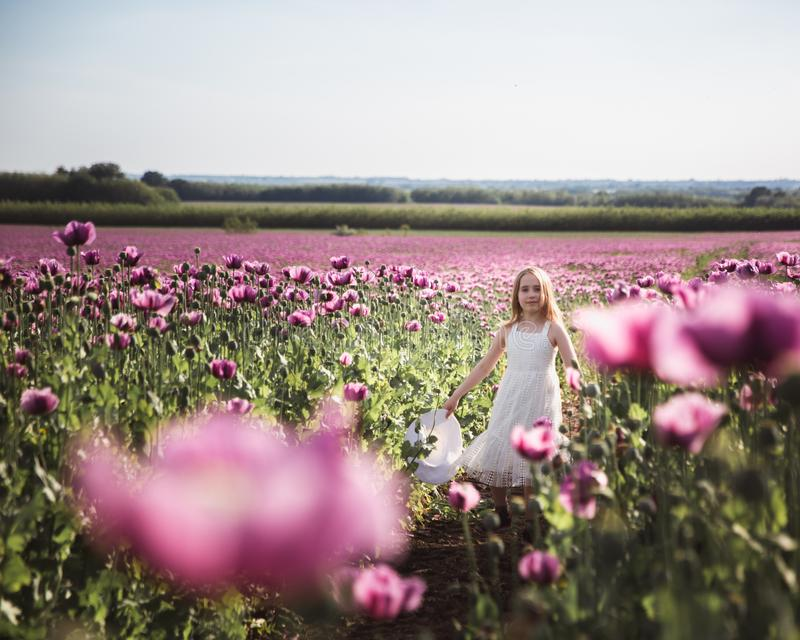 Entz?ckendes kleines M?dchen mit dem langen Haar in wei?es Kleiderdem einsamen Gehen auf dem lila Poppy Flowers-Gebiet lizenzfreie stockfotografie