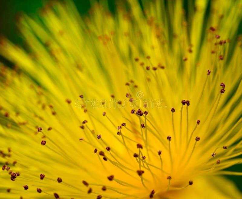 Entziehen Sie Blumenhintergrund stockbilder