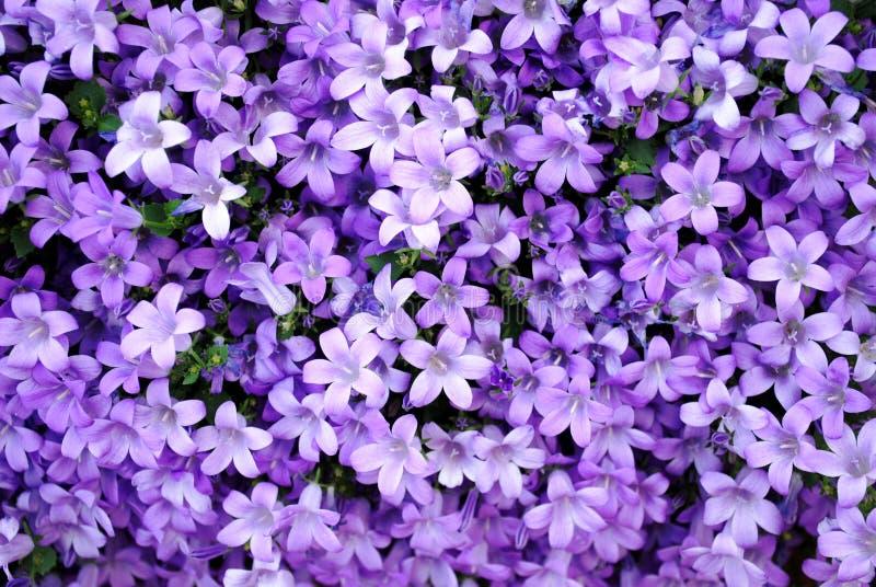Entziehen Sie purpurrote Natur stockbilder