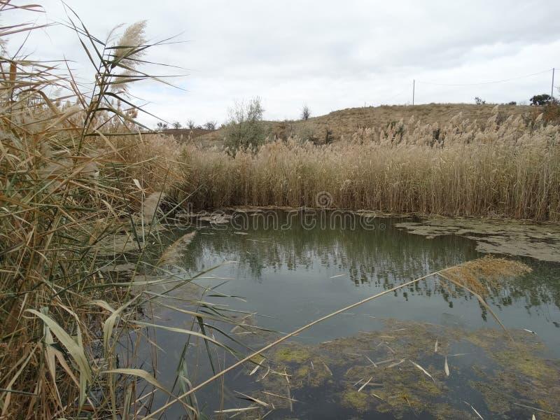 Envahi avec le lac de roseaux images libres de droits