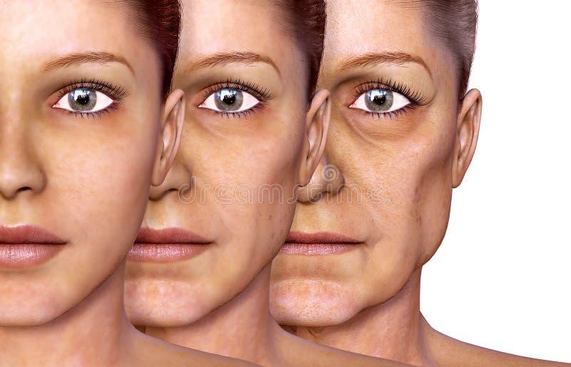 Envelhecimento de uma mulher, pele facial ilustração stock