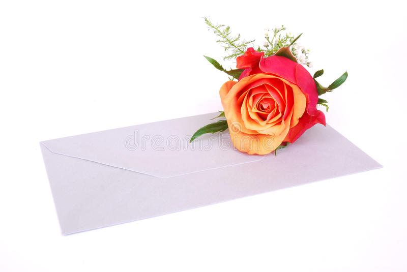 Envelop with rose. Love letter concept: a beautiful flowering blossom of a red rose with orange petals inside lying on top of a grey blank envelop. Image royalty free stock photography