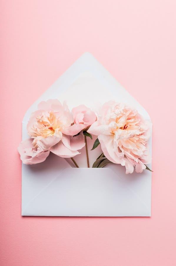 Envelope aberto com arranjos de flores das peônias no fundo cor-de-rosa, vista superior Cumprimento festivo imagens de stock royalty free