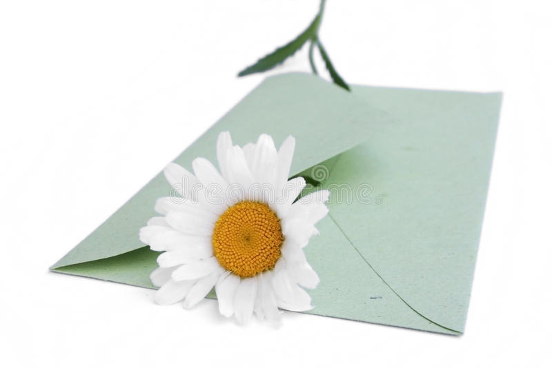Envelope with daisy stock photo