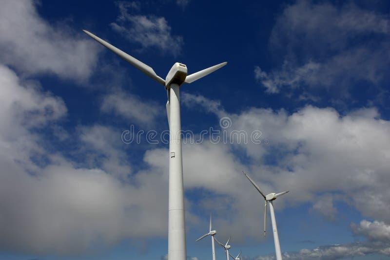 Environment royalty free stock photos