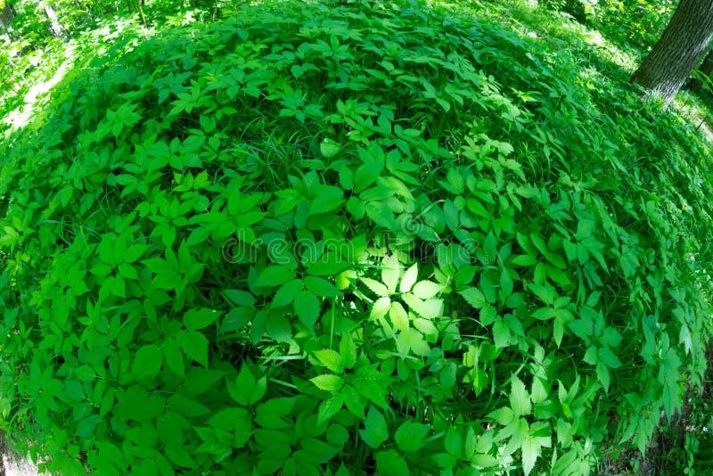 Environment concept image. Green grass in a circle shape royalty free stock photos