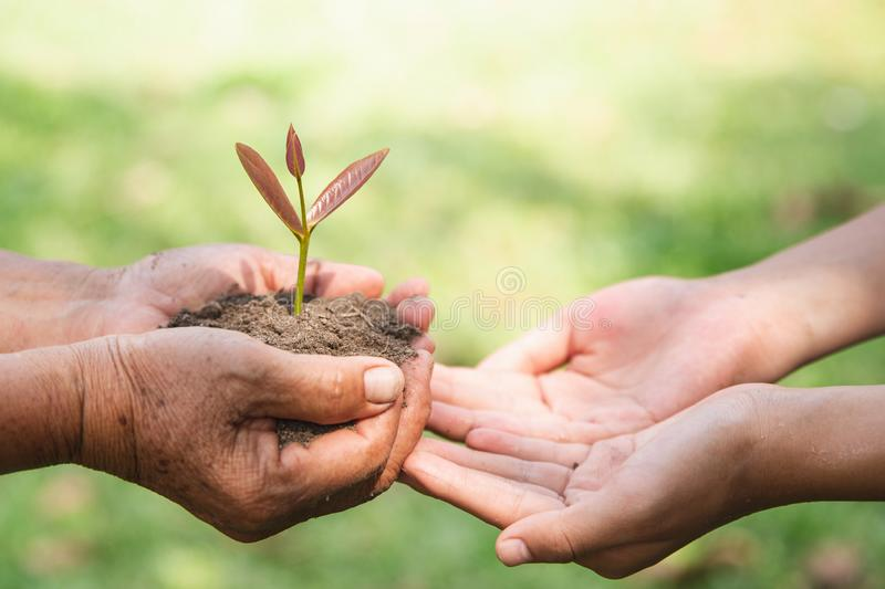 Environment Earth Day, Hands of old women and young women holding tree on nature field grass, Forest conservation, Ecological stock photo