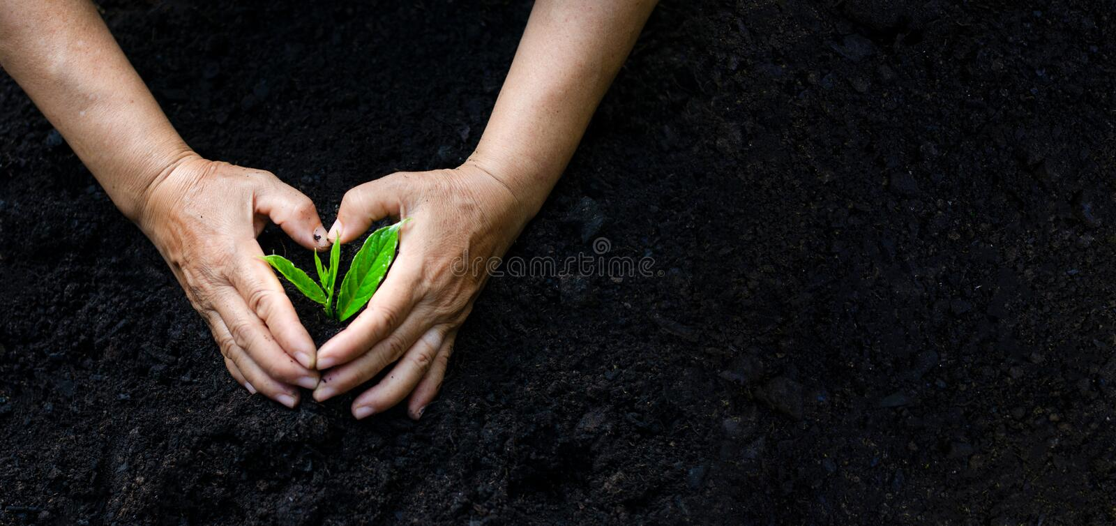 Environment Earth Day In the hands of trees growing seedlings. Bokeh green Background Female hand holding tree on nature field gra. Ss Forest conservation royalty free stock photos