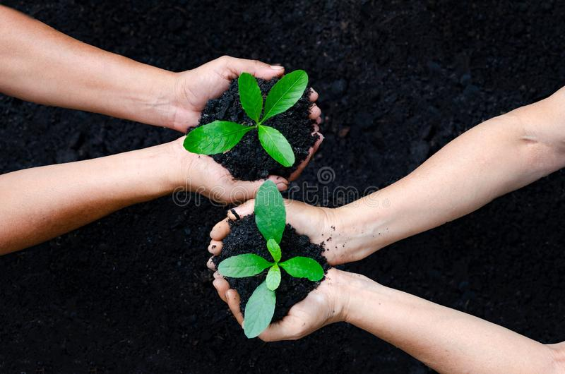 Environment Earth Day In the hands of trees growing seedlings. Bokeh green Background Female hand holding tree on nature field. Environment Earth Day In the royalty free stock photo