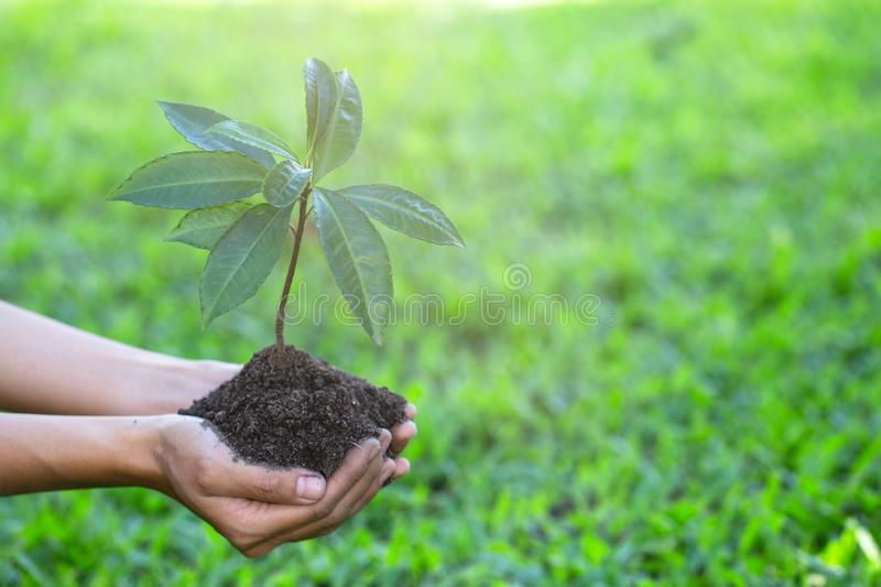 Environment Earth Day, Hands of  young women holding tree on nature field grass, Forest conservation, Ecological concept stock image