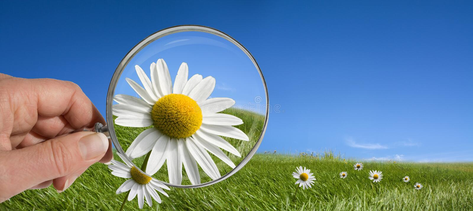 Download Environment Ecology Concepts Stock Image - Image: 21961483