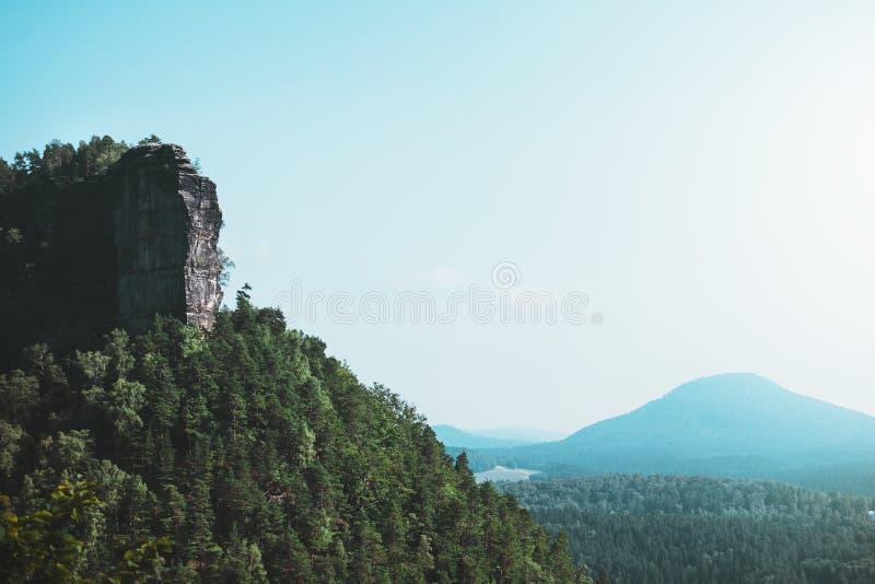 Environment, Foggy, Forest, Hazy royalty free stock photos