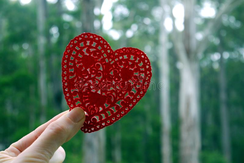 Environment: forest red paper heart stock photos