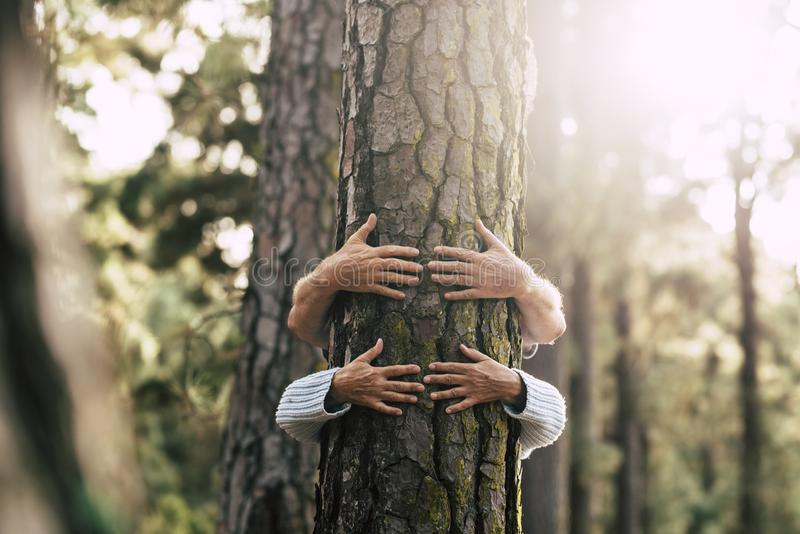 Environment people save the planet and stop deforestation concept with hidden couple of senior hugging with love an old big tree. Pine in  the forest -defocused stock photography