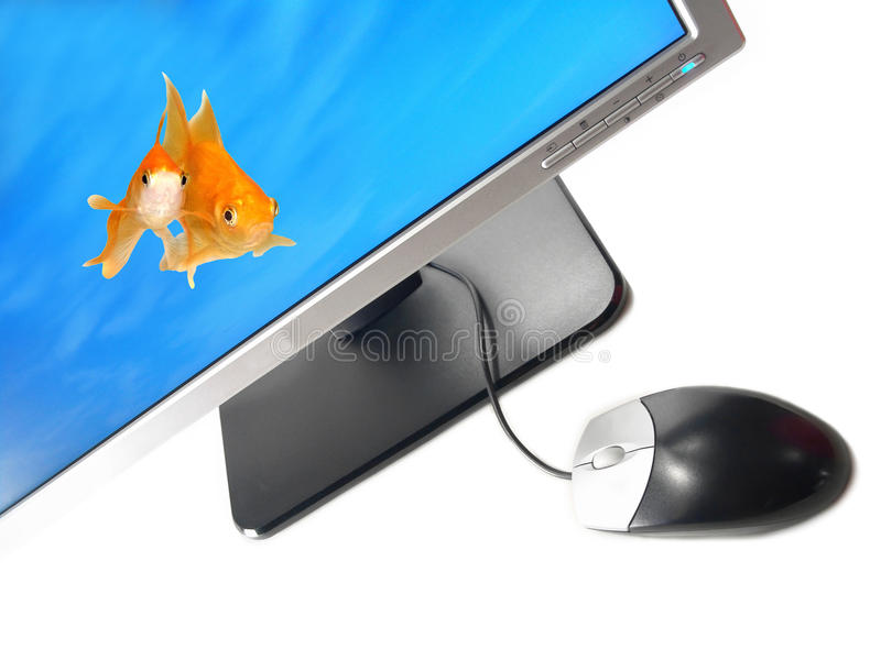 Environmental Friendly Green Technology. A pair of goldfishes coming out from a Wide Screen Computer Monitor (Isolated on white background stock images