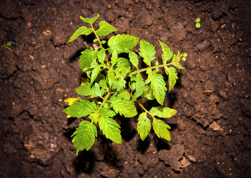 Environmental green plant royalty free stock images
