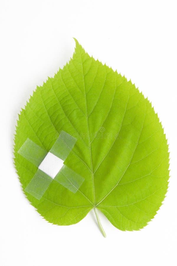 environmental health obraz stock