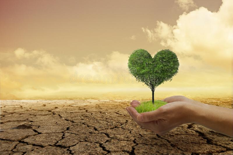 Environmental problems,Protect nature and save the world . A small green heart tree in hand, ready to plant, with a background stock image