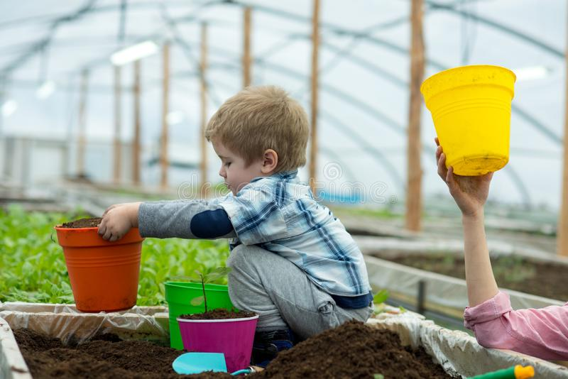 Environmental. environmental protection concept. environmental conditions in greenhouse for growing plants. child stock images