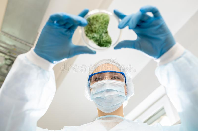Environmental researcher working in laboratory stock photo