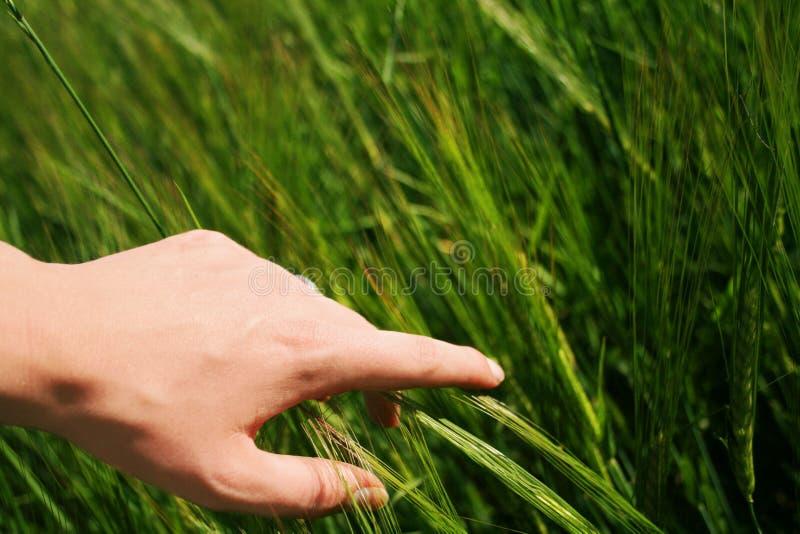 Environmentalism stock photos