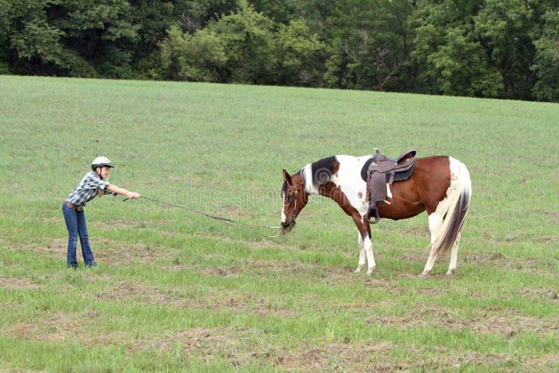 envis häst royaltyfri bild
