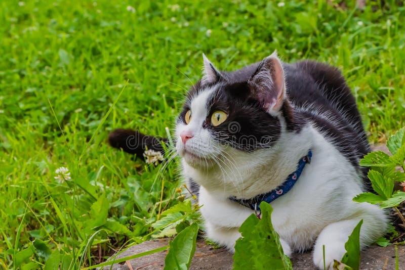 Envit katt med stora gulingögon ligger på gräset fotografering för bildbyråer