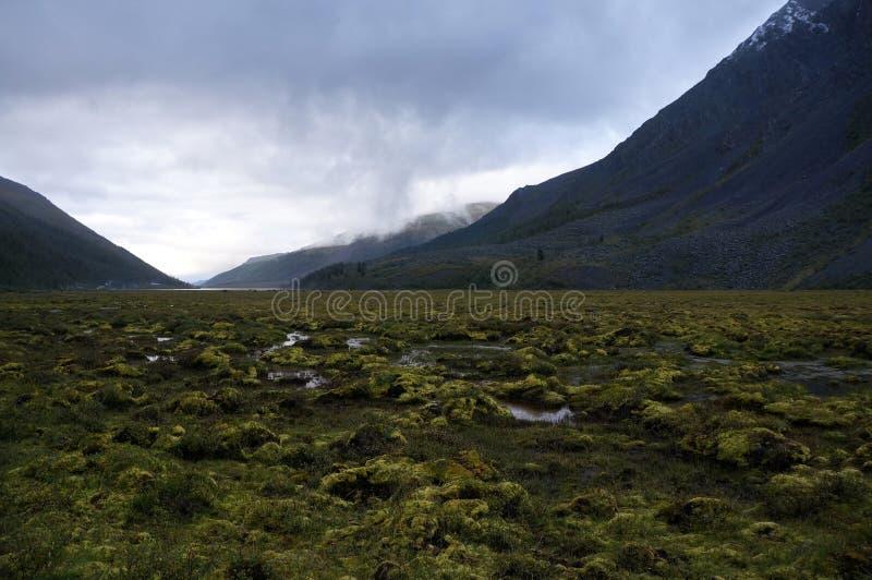 Enxame perto da montanha de Belukha imagens de stock royalty free
