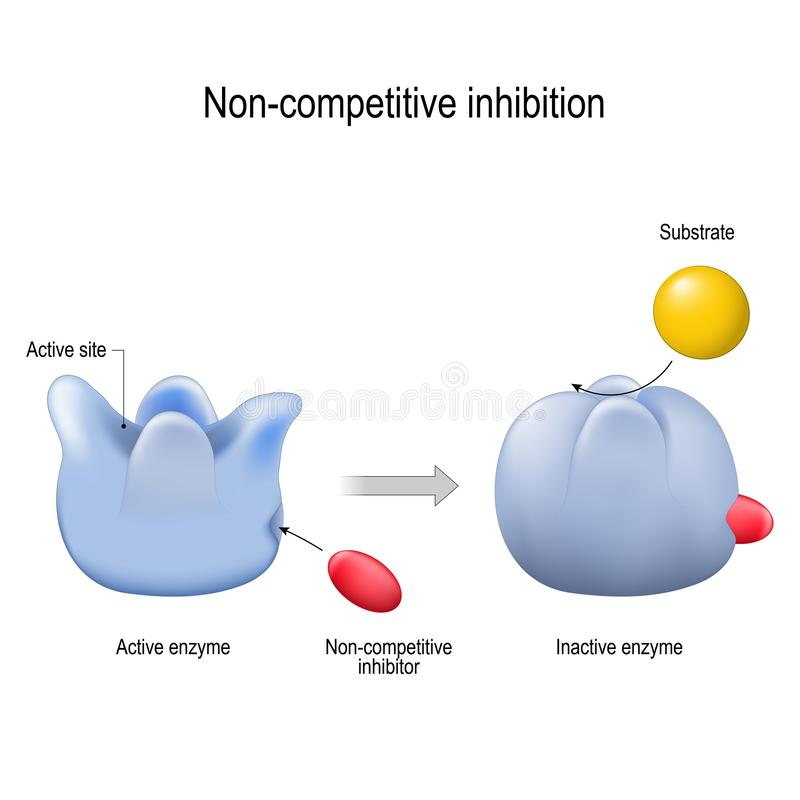 Enzyme. Non-competitive inhibition. inhibitor is a molecule. That blocking to an enzyme and decreases its activity. vector diagram for medical, educational and royalty free illustration