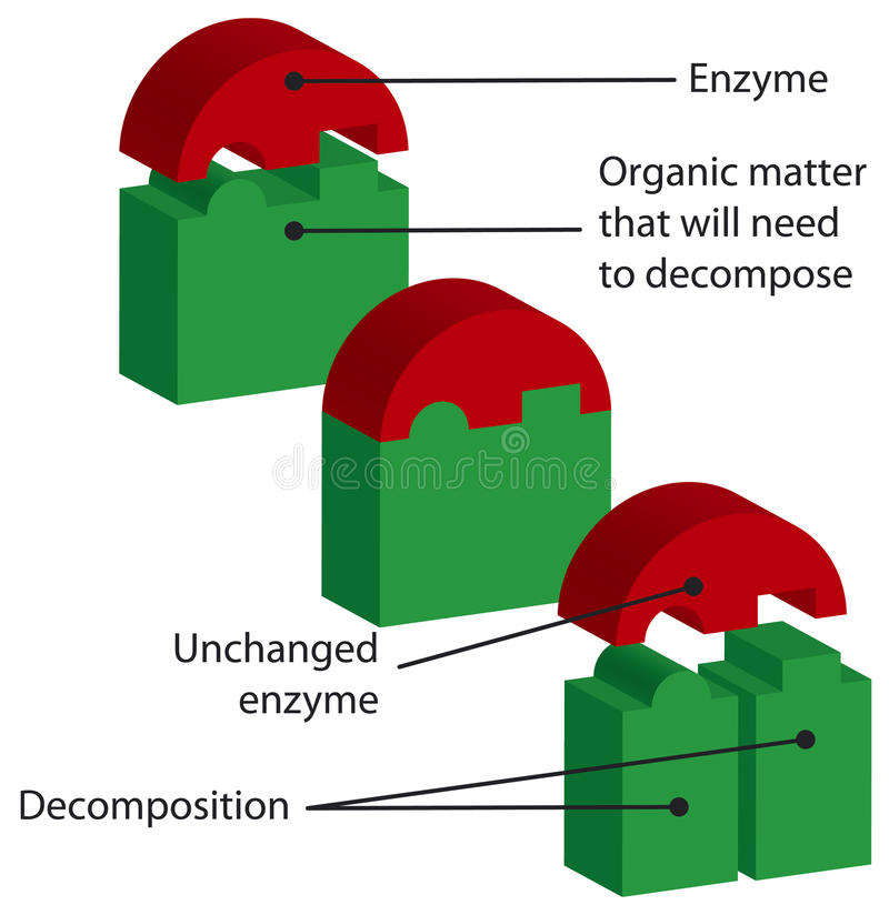 Enzymes Stock Image