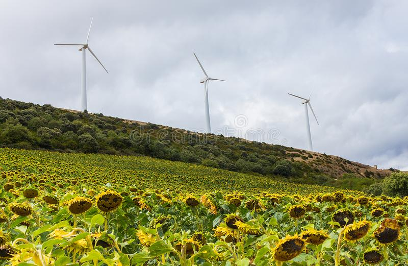Eolian energy turbines on the hills royalty free stock photography