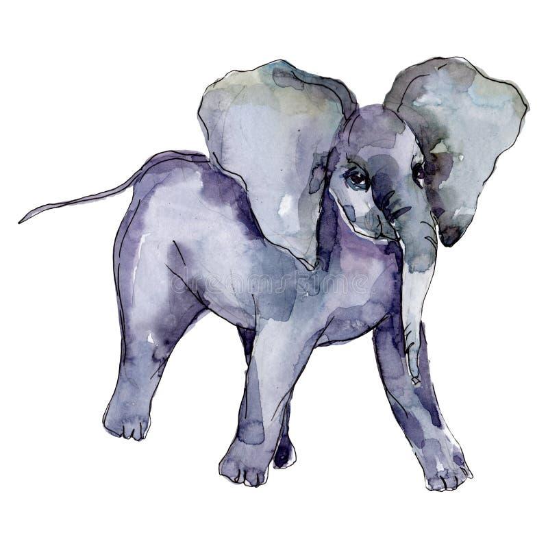 Ephant exotic animal isolado Conjunto de ilustrações de fundo de aquarela Elemento isolado de ilustração do elefante ilustração stock