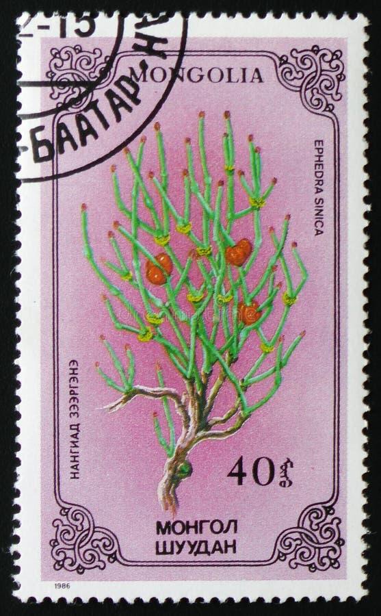 Ephedrasinica of Chinese ephedra, reeks toegewijd aan bloemen, circa 1986 royalty-vrije stock fotografie