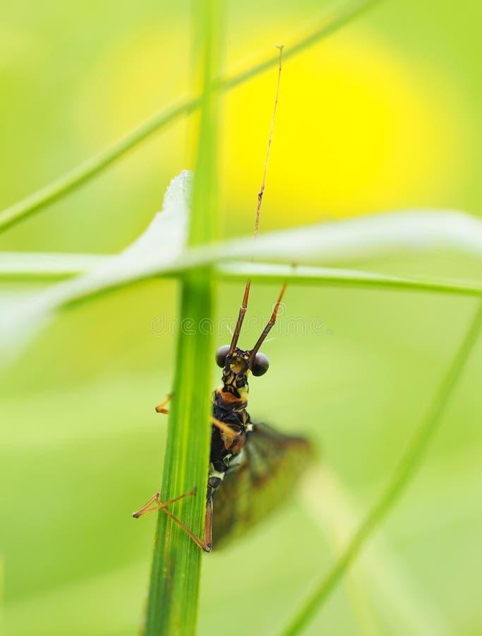 Ephemera в траве стоковое изображение rf