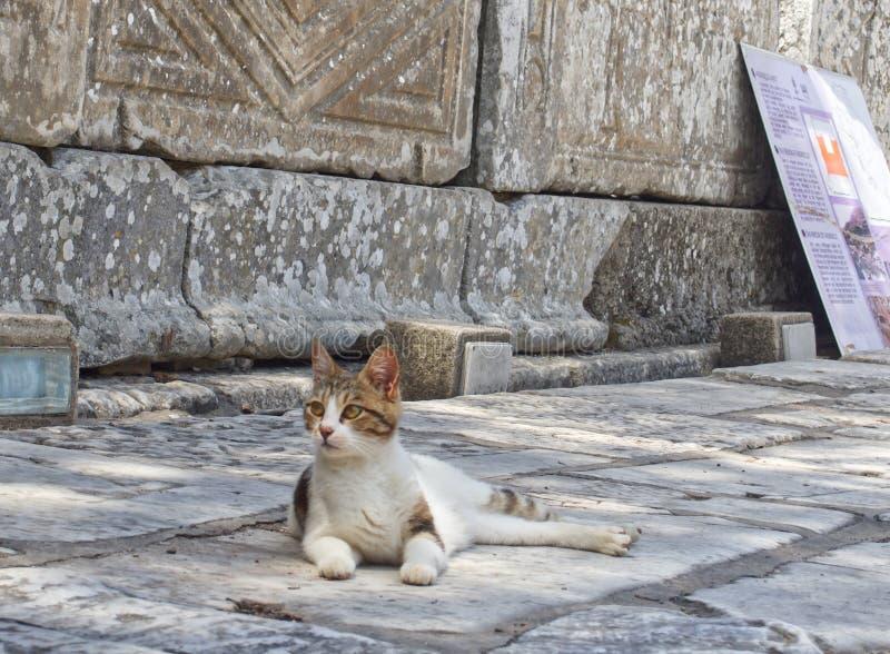 Ephesus obraz stock